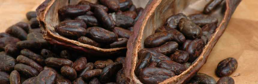 Cacao fino guatemalteco participa en el International Cocoa Awards 2021