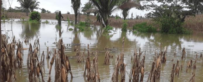 plataforma Bono Familia para aporte a los que perdieron cultivos por Eta y Iota