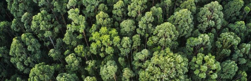 Monitoreo satelital del cultivo de palma de aceite en Guatemala