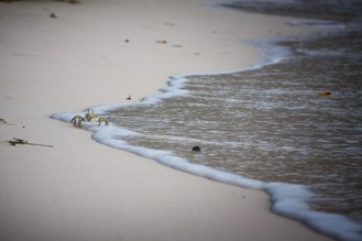 watching crabs run in and out of water is awesome