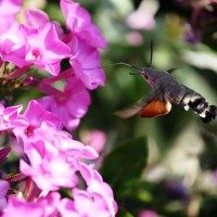 A salvação do colibri