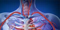 זרימת-מערכת-הדם