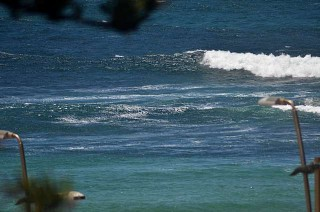 Some mushy ones on tap at Dee Why Point today