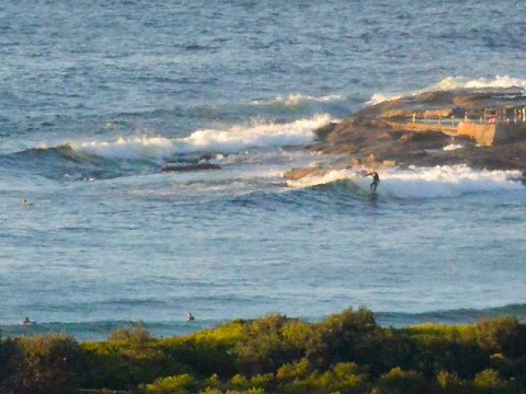 small wave at dee why point