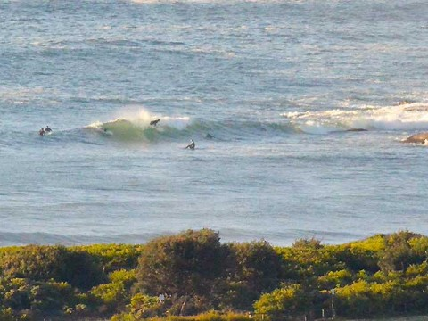 dee why point surfers