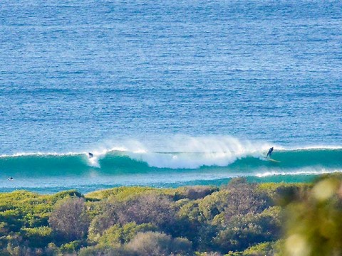 surfing Dee Why beach