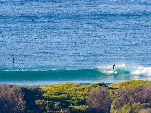 dee why beach surfing
