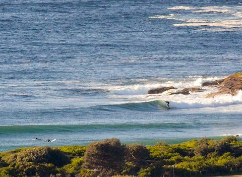 surfing at dee why point