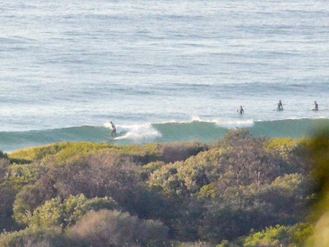 dee why surfing