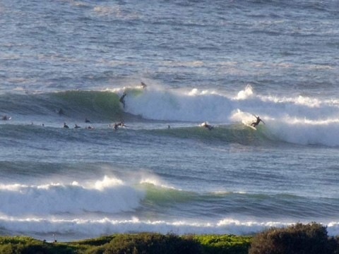 dee why point surfing