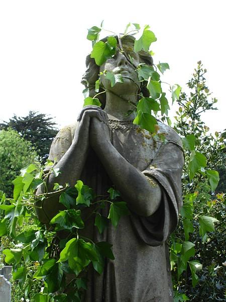 Ivy engulfing grave