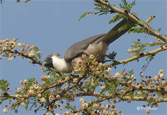 hilzoybird