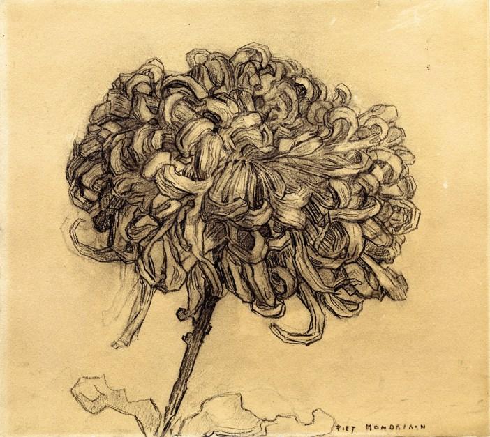 Chrysanthemum 1908. Charcoal on paper. Piet Mondrian