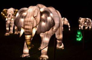 Kids of all ages will enjoy the Glow show. (Samil Baker / Birmingham Zoo)