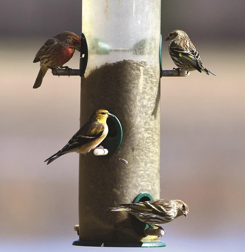 Birds of different species enjoy a meal from a feeder at Wheeler National Wildlife Refuge. (Greg Harber)