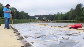 Auburn University researcher developing management practices for problem algae in aquaculture