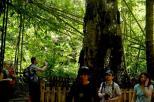misteri di balik pesona pohon Tarra (8)