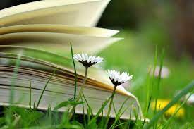 Free picture: daisy, flower, book, grass, reading, learning