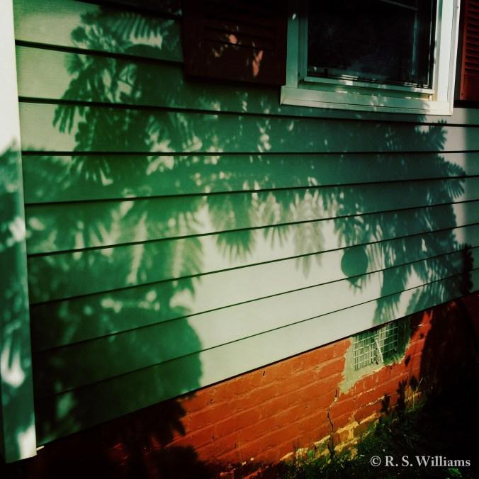 SilkTreeShadowWithVinylSiding_COPY_2016-06-06
