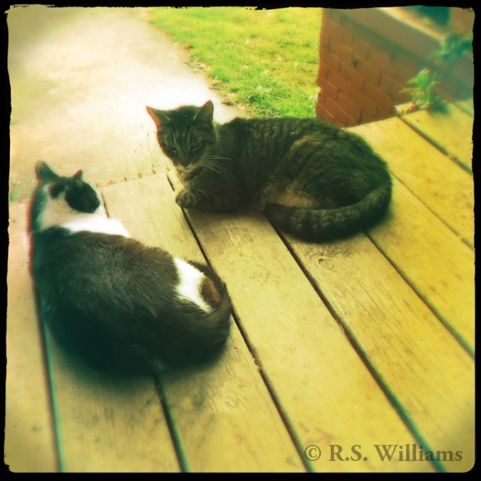 Two short-haired, well-fed cats (one black & white, the other gray tabby) lying on their sides, facing one another, on the wooden floor boards of a front porch. Behind them is a concrete walkway glazed with rain and a bright green patch of grass. Behind the cats and to the right, a lush green vine with white/red flowers climbs across a red brick wall.