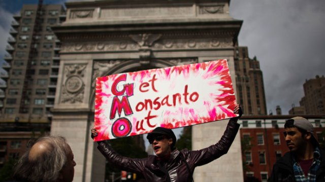 A woman holds up a poster during a protest against U.S.-based Monsanto Co. and genetically modified organisms (GMO), in New York May 25, 2013. (Reuters / Eduardo Munoz)