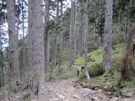 Schwarzwald am Hsueshan