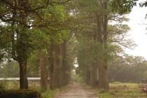 Une allée d'arbres mène aux maisons des employés