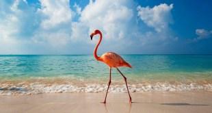 Доминикана перешла рубеж в пять миллионов туристов