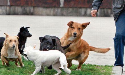 Udomljavanje pasa lutalica u okviru azila