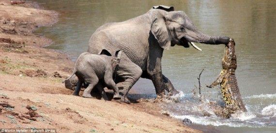 Битвы животных (10 фото)
