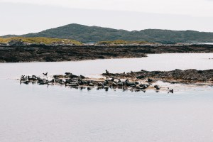 sound of Barra seals