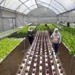 5 Perbedaan Jurusan Agribisnis dan Agroteknologi