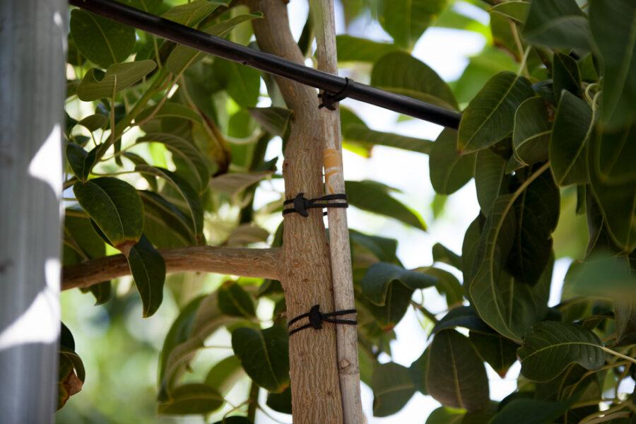 Fabricante de Gomas Elásticas - Industria Agroalimentaria Bandex