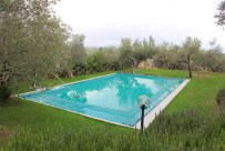 Pool among the olive trees.