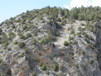 Alto Tajo - Juniperus sp.