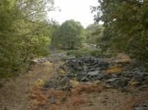 Sierra de San Vicente - Quercus pyrenaica