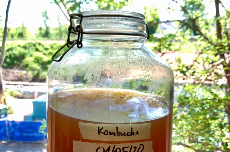 Kombucha oder der fermentierte Gesundheits-Tee