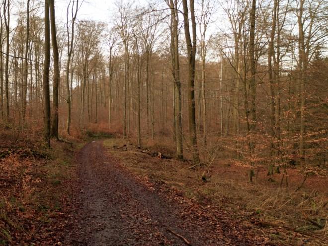 paesaggio del bosco di Idstein