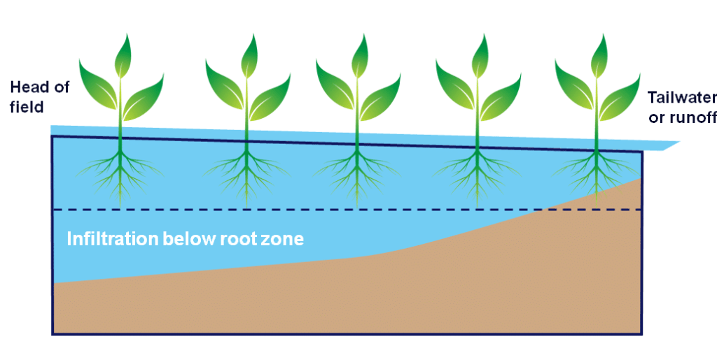 high performance surface irrigation - root zone infiltration