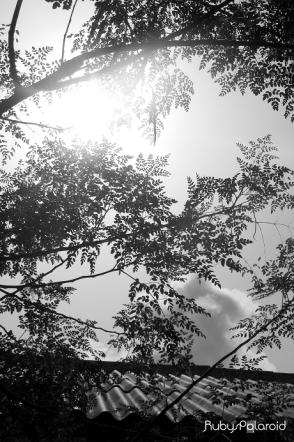 monochrome rays by rubys polaroid