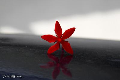 Ruby Star by rubys polaroid