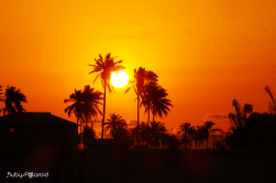 Sun Burst by rubys polaroid