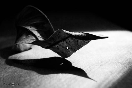 Dead shadows by rubys polaroid