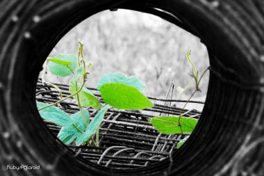 Tunnel Vision monochrome by rubys polaroid