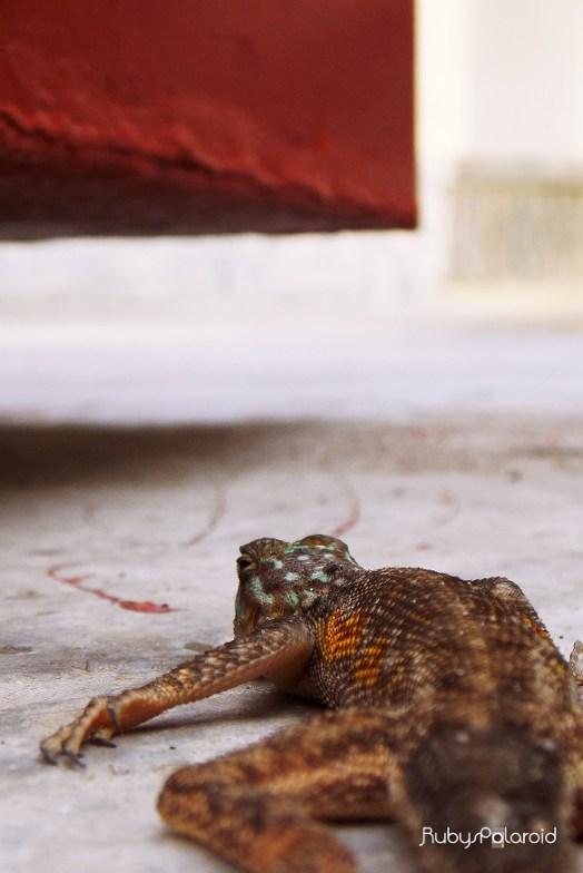 Lizard 3 by rubys polaroid