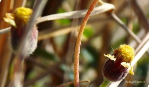 wild flower 3 by rubys polaroid