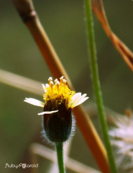 wild flower macro by rubys polaroid