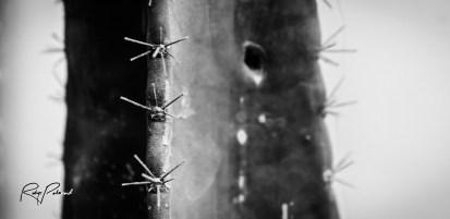 Green Cactus BW by rubys polaroid