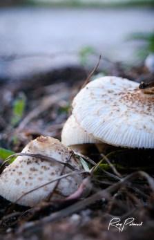 mushroom-macro-3 by rubys polaroid