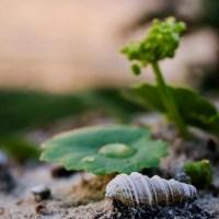 Natural Monday: Baby Sea Shell